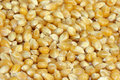 Dried Corn Royalty Free Stock Image - 9093766