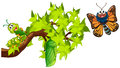 Life Cycle Of Monarch Butterfly Royalty Free Stock Photo - 90905225
