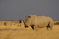 White Rhino Royalty Free Stock Photo - 90920245