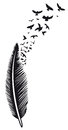 Feather, Birds Stock Photography - 90930522