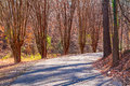 Alley With Leopard Trees In Lullwater Park, Atlanta, USA Royalty Free Stock Photography - 90938747