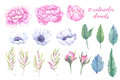 Watercolor Illustrations. Spring Leaves, Peonies And Anemones Fl Royalty Free Stock Photo - 90964635