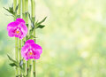 Lucky Bamboo And Two Orchid Flowers On Natural Green Background Royalty Free Stock Image - 90991096