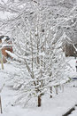 A Small Tree Under Snow In April Stock Images - 91011284
