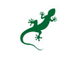 Gecko Vector Illustration Stock Images - 91031934