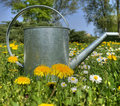 Watering Garden Can As Spring Symbol Royalty Free Stock Photo - 9118535