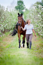 Woman And Bay Horse In Apple Garden. Horse And Beautiful Lady Walking Outdoor. Stock Image - 91103651