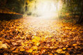 Autumn Leaf Litter In Garden Or Park, Fall Outdoor Nature Background With Colorful Fallen Leaves Stock Photos - 91110953