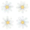 Set Of Isolated, White Camomile, Daisy. Vector Flowers On White Background. Template For For T-shirt, Fashion, Prints Stock Photos - 91111613