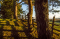 Trees And Cedar Fence In Evening Sunshine Royalty Free Stock Images - 91205299