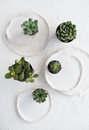 Minimalistic Still Life With Ceramic Plates And Green Succulents Royalty Free Stock Image - 91209706