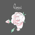 Blooming Rose On A Dark Background Royalty Free Stock Image - 91229106