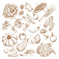 Vector Sketch Isolated Vegetables Icons Stock Image - 91242071