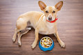 Hungry Dog With Food Bowl Royalty Free Stock Photos - 91261488