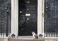 10 Downing Street Chief Mouser Cat Stock Image - 91325381