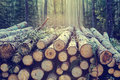 Pile Of Wood Royalty Free Stock Images - 91367839