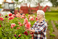 Senior Woman With Dahlia Flowers At Summer Garden Stock Photos - 91388583