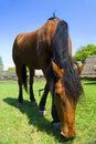 Horse Grazing Royalty Free Stock Photography - 9146617