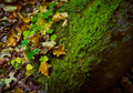 A Stone Covered With Moss And Grass In The Autumn Forest Royalty Free Stock Image - 91409516