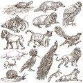 Animals Around The World - An Hand Drawn Full Sized Pack. Hand D Royalty Free Stock Photo - 91416655