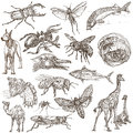 Animals Around The World - An Hand Drawn Full Sized Pack. Hand D Royalty Free Stock Photo - 91416755