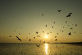 Beautiful Sunset And Flying Birds Over The Sea Stock Image - 91431361