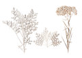 Set Of Wild Dry Pressed Flowers And Leaves Stock Photo - 91437760