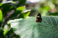 A Butterfly Stock Images - 91467084