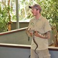 An Animal Keeper With A Python Royalty Free Stock Images - 91472819