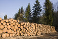 Stack Of Pine Tree Wood In Forest Stock Photography - 9156862