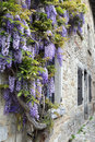 Blooming Wisteria On The Street Of French Village Royalty Free Stock Image - 91555426