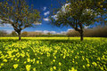 Sicilian Spring Royalty Free Stock Photo - 9162325
