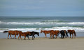 Wild Beach Horses Royalty Free Stock Images - 91605889