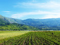 Albanian Field With Farmer Royalty Free Stock Photo - 91607265