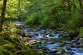 Hiking Along Tanner Creek In The Columbia River Gorge Stock Images - 91620084