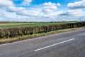 Sunny Day View Of Empty UK Country Road Stock Photo - 91640210