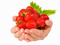 Female Hands Holding Handful Of Strawberries Close Up. Stock Image - 91648971