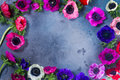 Anemones Flowers On Stone Background Stock Photo - 91656630