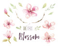 Watercolor Boho Blossom Flower Set. Spring Or Summer Decoration Royalty Free Stock Photo - 91661255