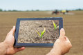 Smart Agriculture. Farmer Using Tablet. Frost Damage To Plants. Royalty Free Stock Photography - 91687607