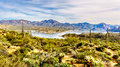 Lake Bartlett Surrounded By The Mountains And Many Saguaro And Other Cacti In The Desert Landscape Stock Photography - 91697832
