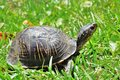 Turtle Stock Images - 9181054