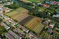 Organic Vegetable Farming, Agriculture Aerial Photography Stock Photography - 91801982