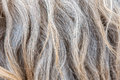 Sheep Wool Texture Stock Images - 91805644