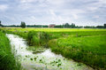 Ditch Along A Field In The Countryside Of The Netherlands Stock Photography - 91809962