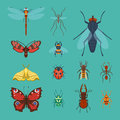 Colorful Insects Icons Isolated Wildlife Wing Detail Summer Bugs Wild Vector Illustration Royalty Free Stock Photography - 91813617