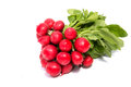 Small Garden Radish Isolated On White Royalty Free Stock Images - 91813679