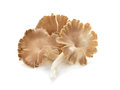 Fresh Oyster Mushroom On White Background. Mushroom Brown Isolat Royalty Free Stock Photo - 91840525