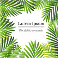 Set Of Tropical Palm Leaves - For Design Elements, Scrapbooking In  Summer Background For The Website Or The Brochure Royalty Free Stock Image - 91864126