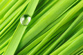 Drops On A Grass Royalty Free Stock Images - 9191269